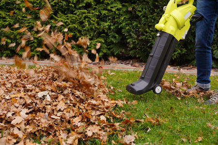 Autumn work in the garden. Scraping the leaves with the help of a blower. Standard-Bild
