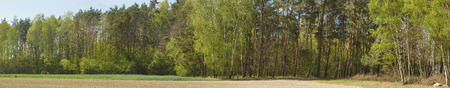 Multi-species mixed forest on the edge of cultivated fields. Spring panorama. Reklamní fotografie