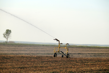 Water sprinkler installation in a field during the drought. Preparation of the field for cultivation.
