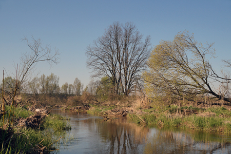 Spring on the banks of the river.  A small natural, wild river.