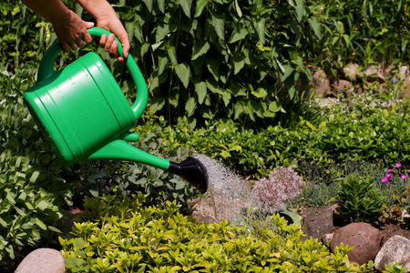 A hot, sunny day. Watering plants in the garden with water from a watering can.