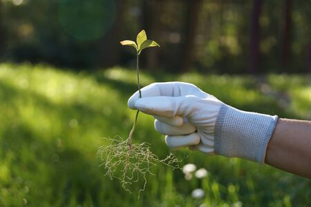 Symbol of human care over his environment. A hand holding a young tree a moment before planting in the ground. Stock fotó