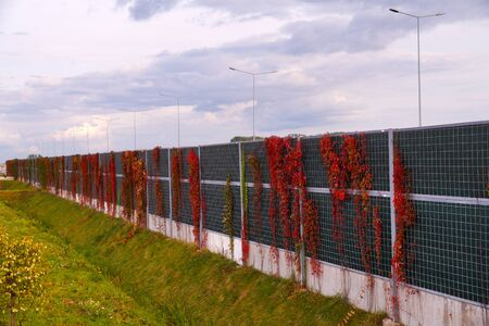 Autumn. Noise barriers at the highway overgrown with Virginia Creeper. Stock Photo - 133668364