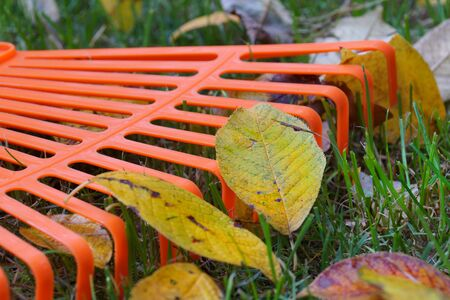 Closeup on leaves and rake.  Autumn cleaning works.