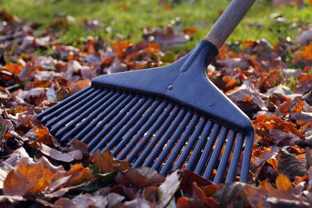 Obligatory activities in the garden. Symbol of autumn gardening: rakes and leaves. Stock Photo