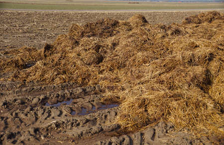 A stack of natural fertilizer which is manure before spreading it in the field. Spring work on the farm.