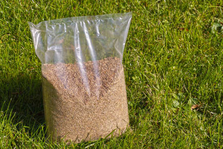 Sowing grass, setting up a lawn. Foil packaging with grass seeds. Standard-Bild