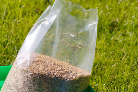 Foil packaging with grass seeds. Sowing grass, setting up a lawn.
