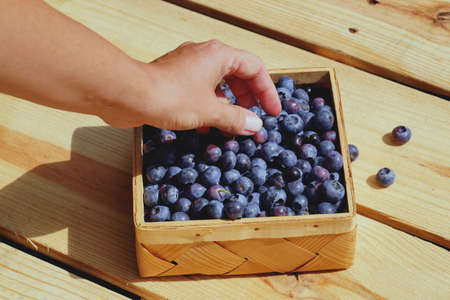 A female hand and a wooden container for fruit. Highbush blueberry fruit collection.