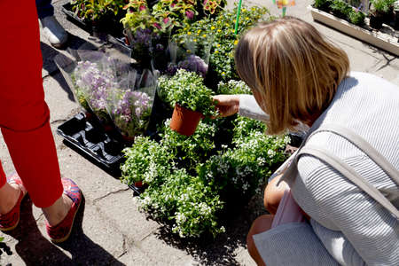 Spring shopping at the garden store. Woman buying potted flowers.