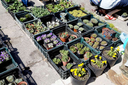 Customers in a garden shop filled with boxes of plants. Spring sale of flowers. Standard-Bild
