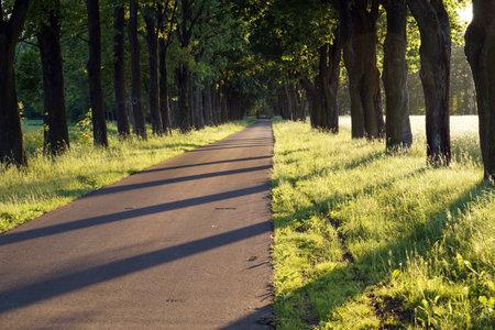 Sunset. The alley of roadside trees cast long shadows. Standard-Bild