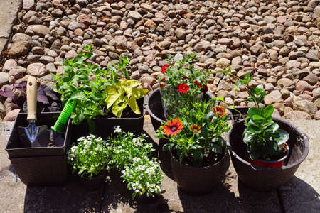 Preparation for planting plants in the home garden. After shopping at the garden store. 10