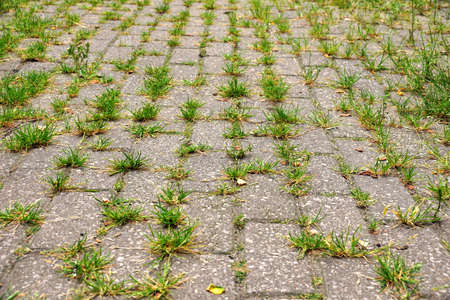 Dilapidated area. Weeds growing from the gaps between the cobblestones. Banque d'images