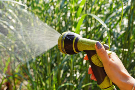 Watering garden crops with a watering gun. A sunlit stream of water.