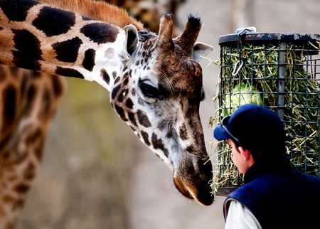 Visual moments from a great international zoo park - Fauna