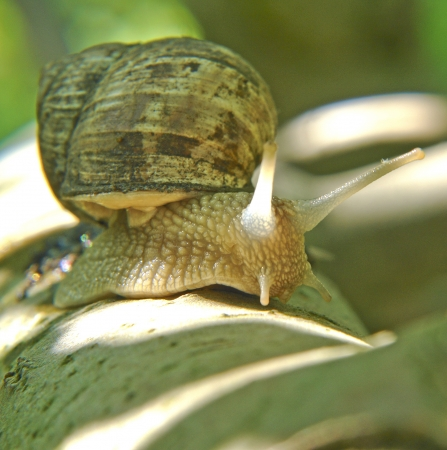 Snail and the natural conditions in the afternoon photo