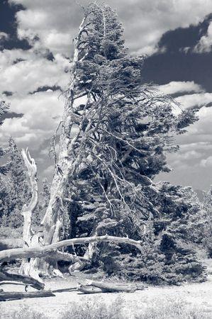 high sierra: High Sierra in black and white - lone pine