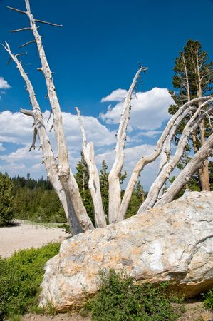 high sierra: High Sierra, California landscape Stock Photo