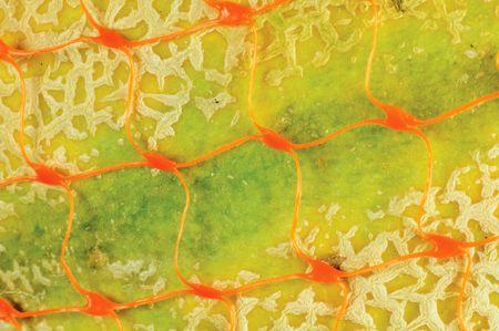 Macro of cantaloupe melon in orange storage net Stock Photo