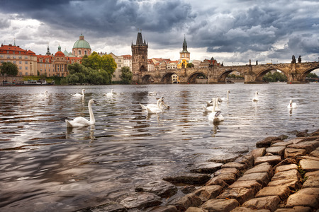 trivia: The center of Prague, river and white swans. The historic center of Prague, ancient architecture, and cultural heritage