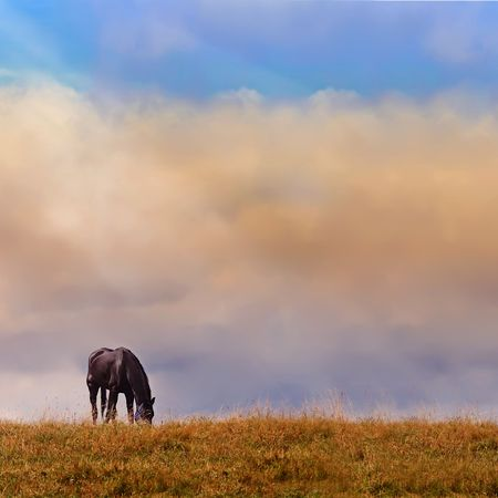 A lonely horse on a log, in a background of clouds illuminated by beams of the sun