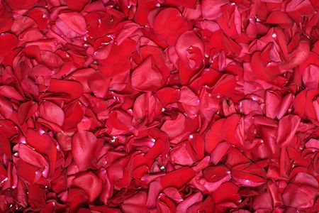 Background from petals of red roses photo