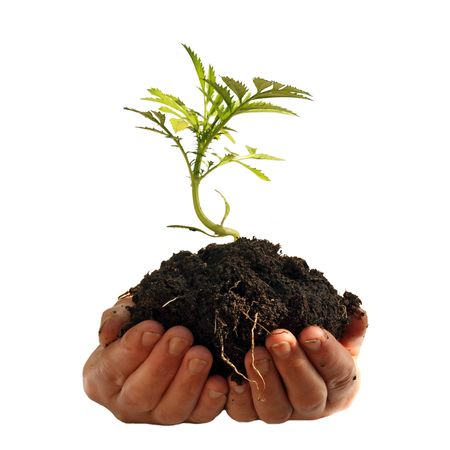 Young plant in human hands Stock Photo