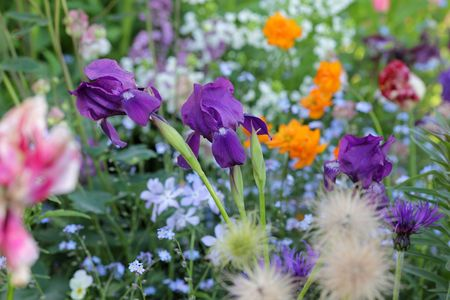 Multicolored flowers bed photo