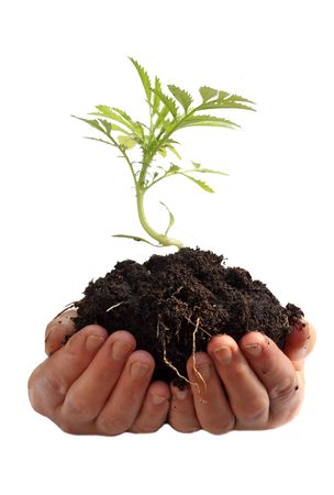 Young plant in human hands Standard-Bild