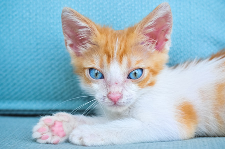Cute expressive orange kitten with blue eyes on sofa