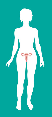 uterine: Ovaries. Modern medical infographics. Internal organs in a human body. Anatomy of people