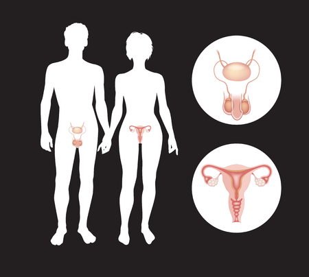 The male and female reproductive systems. Silhouettes of men and women with sexual organs. This work - eps10 vector file,  Vettoriali