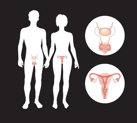 Die männlichen und weiblichen Fortpflanzungssysteme. Silhouetten von Männern und Frauen mit Geschlechtsorganen, diese Arbeit Vektordatei,