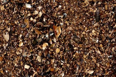 land shell: Texture of beach sea sand