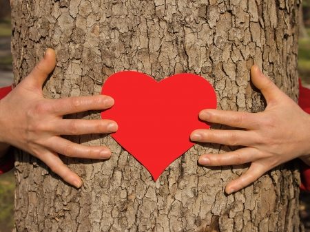 Hands on a tree St  Valentine s Day