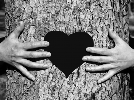 Hands on a tree St  Valentine s Day Stock Photo - 18463769