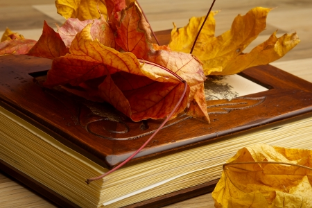 Close up of an album and Autumn leaves