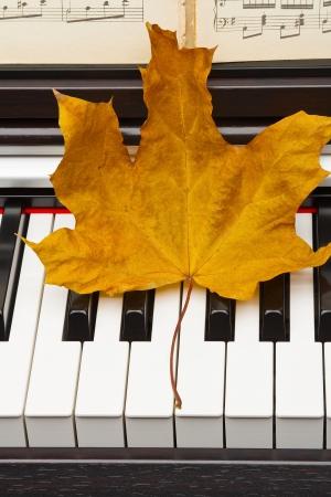 ivories: Autumn leaves on the keys