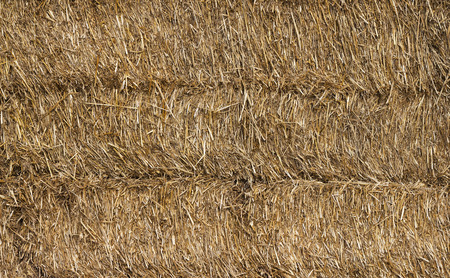 Texture of dry straw Background photo