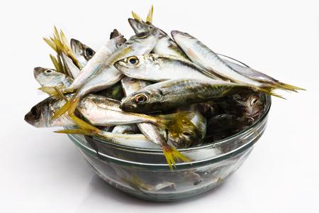 bank activities: Black Sea fresh scad fish Stock Photo