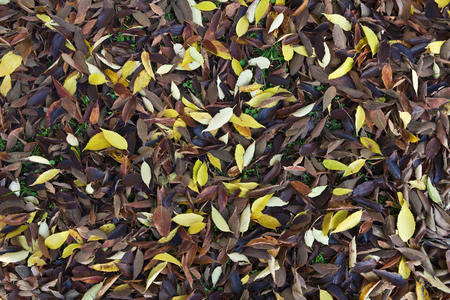 Close-up of autumn leaves on the ground