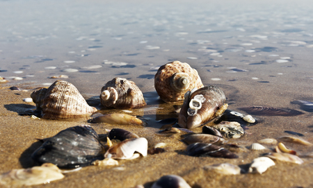 Empty seashells on the Black Sea coast