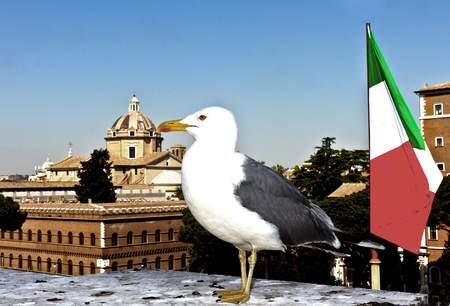 Seagull on the background of the Italian flag and blue sky