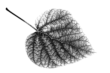 Leaf, black and white Stockfoto