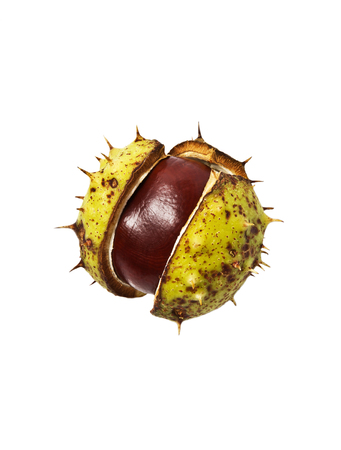 Horse chestnut fruit on white background
