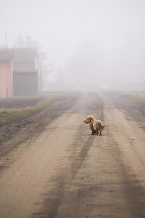 Kleine hond loopt langs de weg in mist