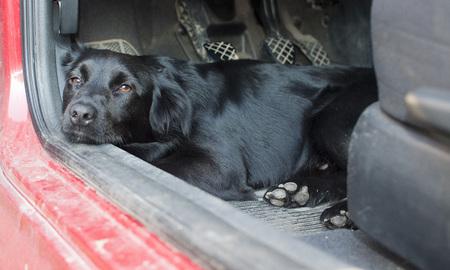 Zwarte hond die op een autovloer rust met droevige blik in zijn ogen. Lage scherptediepte Stockfoto