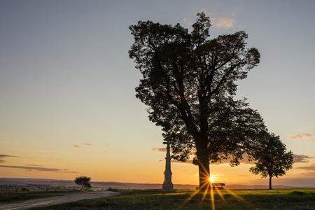 Tree silhouette in sunset with a wayside cross, Olomouc Czech Republic