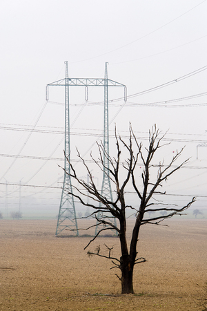Single dead tree standing in empty field with electric columns in background. Dead soil. Bad effects of agriculture